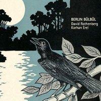 BERLIN BULBUL