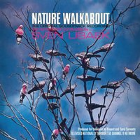 sven libaek - Nature Walkabout