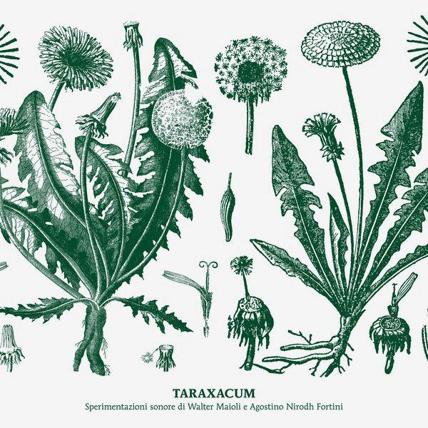 TARAXACUM (LP)