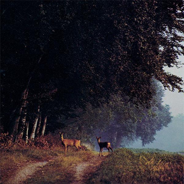 SVENSK SOMMAR I STILLA FRID (LP)