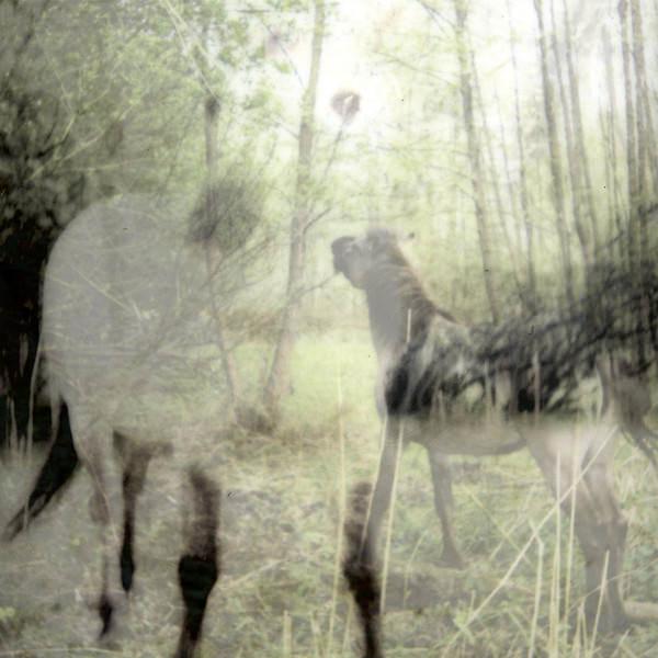 PAGUS WASIAE (LP)