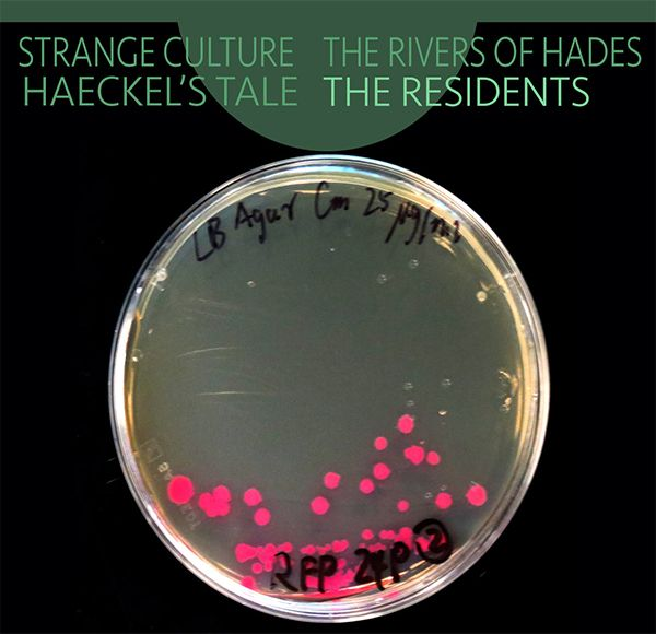 Strange Culture / Rivers of Hades / Haeckel's Tale (2CD)