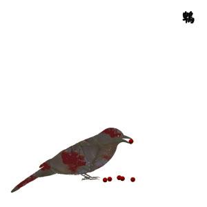 13 Japanese birds Vol.10 Niwatori